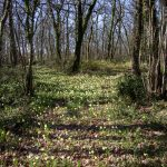 Chateau Woods in Spring